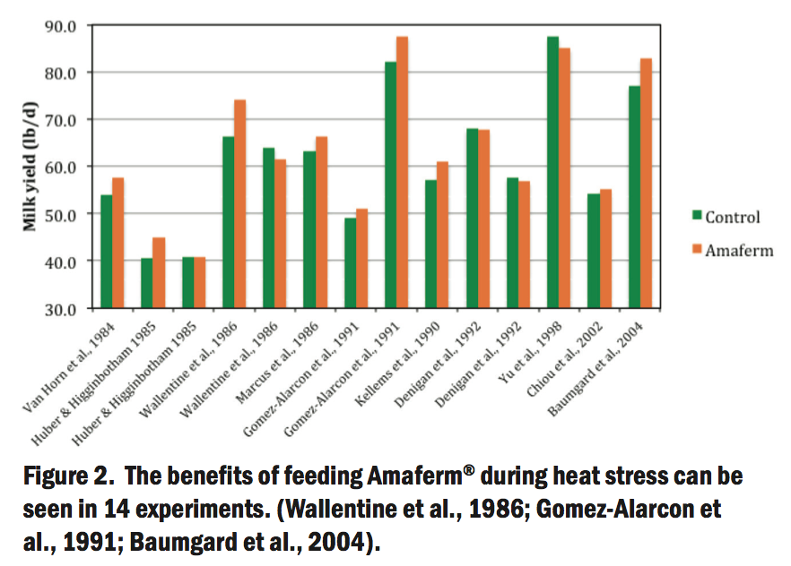 Amaferm Effect on Heat Stress