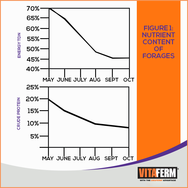 Nutrient Content of Forage