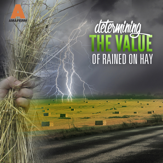 Value of Rained on Hay