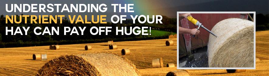 Test Your Hay Header