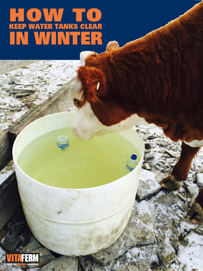 How to KEEP Water Tank Clear in Winter