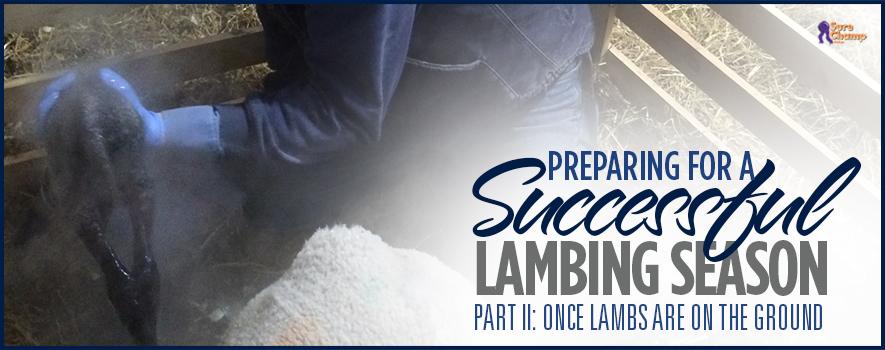 surechamp-lambing-header-feb2016