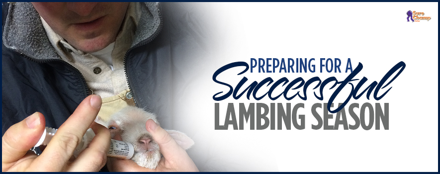 surechamp-lambing-header-jan2016