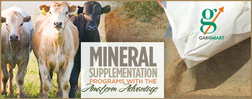 Mineral Supplementation Programs with the Amaferm Advantage