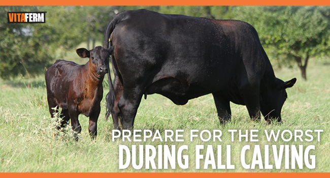 VitaFerm Tips for Fall Calving
