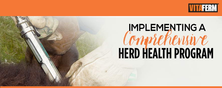 Herd Health Recommendations at Calving Time