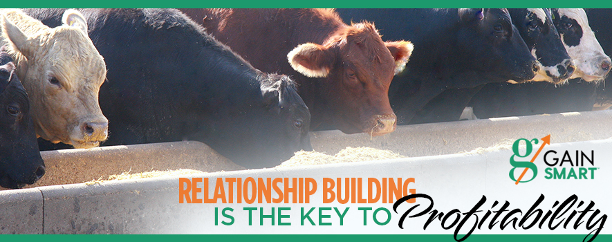 Choosing the Right Cattle Feeding Operation